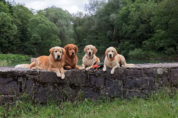 pozdrav z doliny Oro, Momo, Megy a Fifi